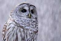 I love owls, do you love owls? If you do, join this group :D