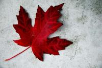 For all of us living above the 49th parallel! For anyone who is Canadian and proud of our North, Strong and Free! :P